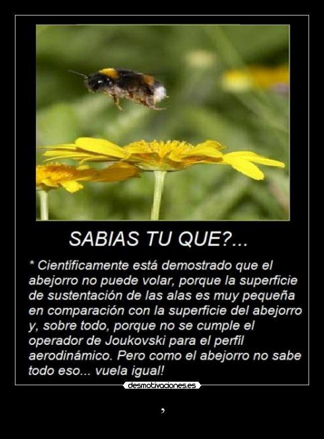 abejorroflor